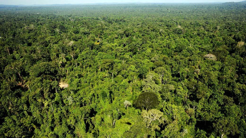 Resultado de imagem para UFV – Desmatamento pode afetar produção de safras na Amazônia